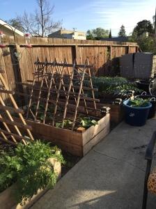 Part of my garden.